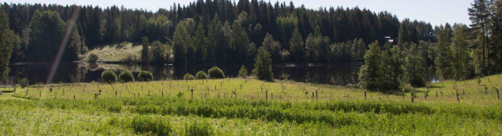 Aito maaseutu Keski-Suomessa