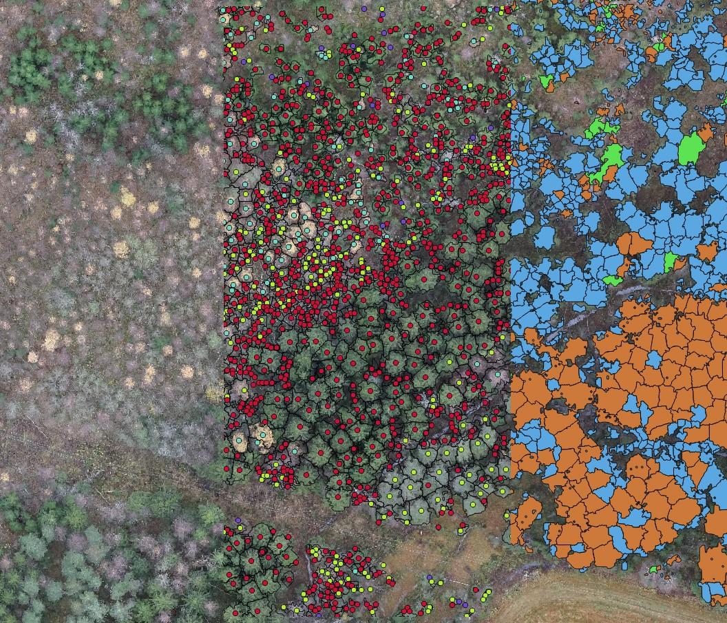 Maaseutu 2.0 -hankkeen artikkeli, kuva 3. Lähikuva kohteesta, resoluutio 3 cm/pikseli. Vasemmalla pelkkä orthomosaikki, keskellä latvatunnistus ja puulajiluokitus (vihreä mänty, punainen kuusi, sininen lehtipuu, violetti tunnistamaton) sekä oikealla latvussegmentointi ja puulajiluokitus (oranssi mänty, sininen kuusi, vihreä lehtipuu)