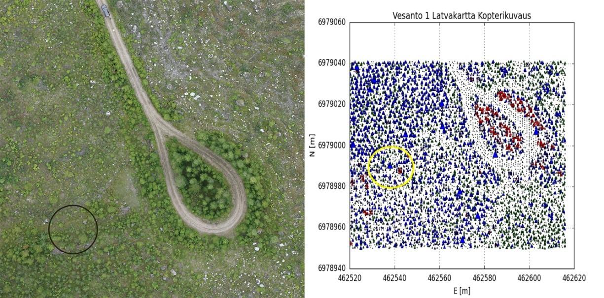 Maaseutu 2.0 -hankkeen artikkeli, kuva 6: Honkakankaan keskimmäisen lentoalueen lähtöpaikka sekä yksi koeala (musta/keltainen ympyrä). Vasemmalla n. 50% suurennus orthokuvasta, oikealla taimien tunnistus kopterikuvauksen pistepilvestä (T1, T2, 02).