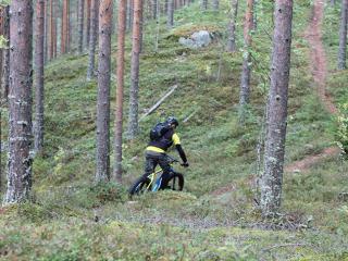 Pyöräilyä metsässä